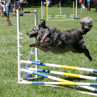 Moka and Agility